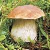 От грибов лучше воздержаться