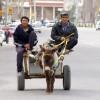 Придёт ли в Узбекистан «арабская весна»?
