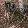 Три пройдохи и собака