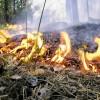 В республике Татарстан второй год отсутствуют лесные пожары