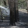 Татарстану выделят 15,8 млн рублей на технику для борьбы с пожарами