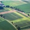 Крупный ягодный кластер создали в Татарстане