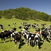 Татарстанские фермеры получат гранты