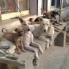 В НЧ озаботились отловом безнадзорных животных