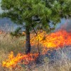 РТ встретит сезон пожаров в полной готовности