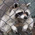 В Набережных Челнах построят зоопарк нового типа